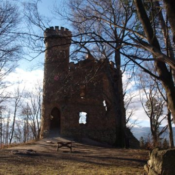 Leśna wyprawa na Zamek Henryka
