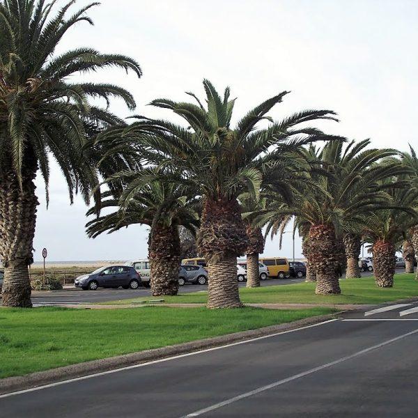 Zbieraj sie, Fuerteventura, droga