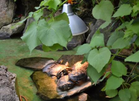 Zbieraj się, Palmiarnia w Wałbrzychu, żółwie
