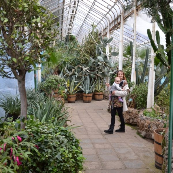 Zbieraj się, Wałbrzyska palmiarnia, rośliny (2)