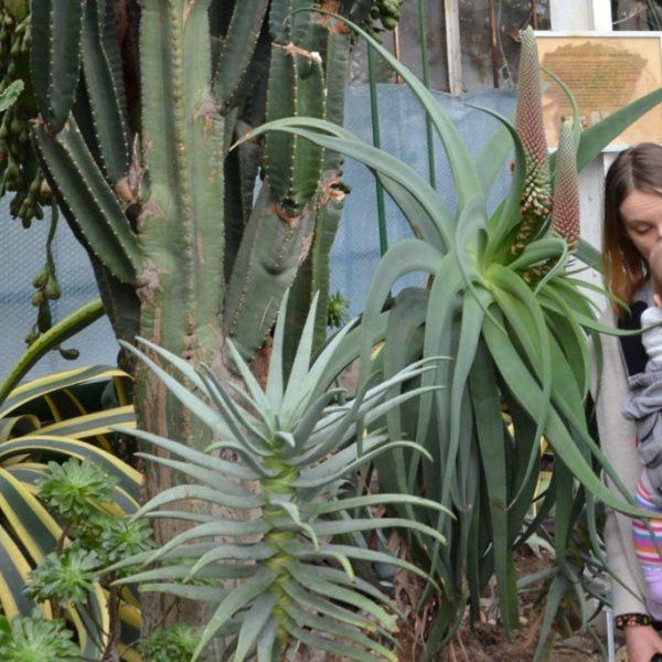 Zbieraj się, Wałbrzyska palmiarnia, rośliny (3)