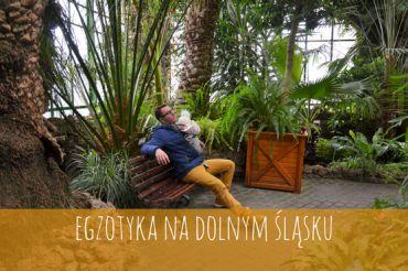 Palmiarnia w Wałbrzychu – Perełka od Księżnej Daisy