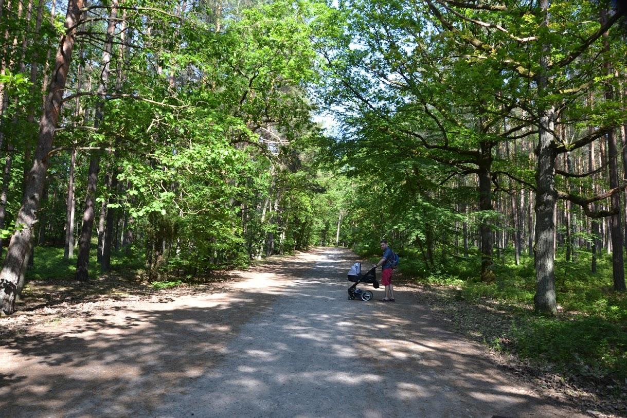 wózek w lesie