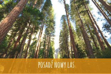 Zasadźmy sobie las z Brave Festiwal na wrocławskich Świniarach