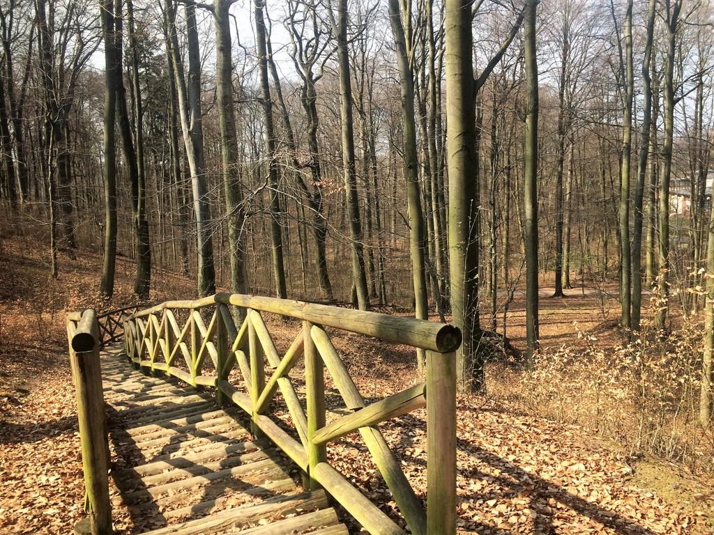 Bukowy Las w Trzebnicy_ drewniana kladka_Zbierajsie