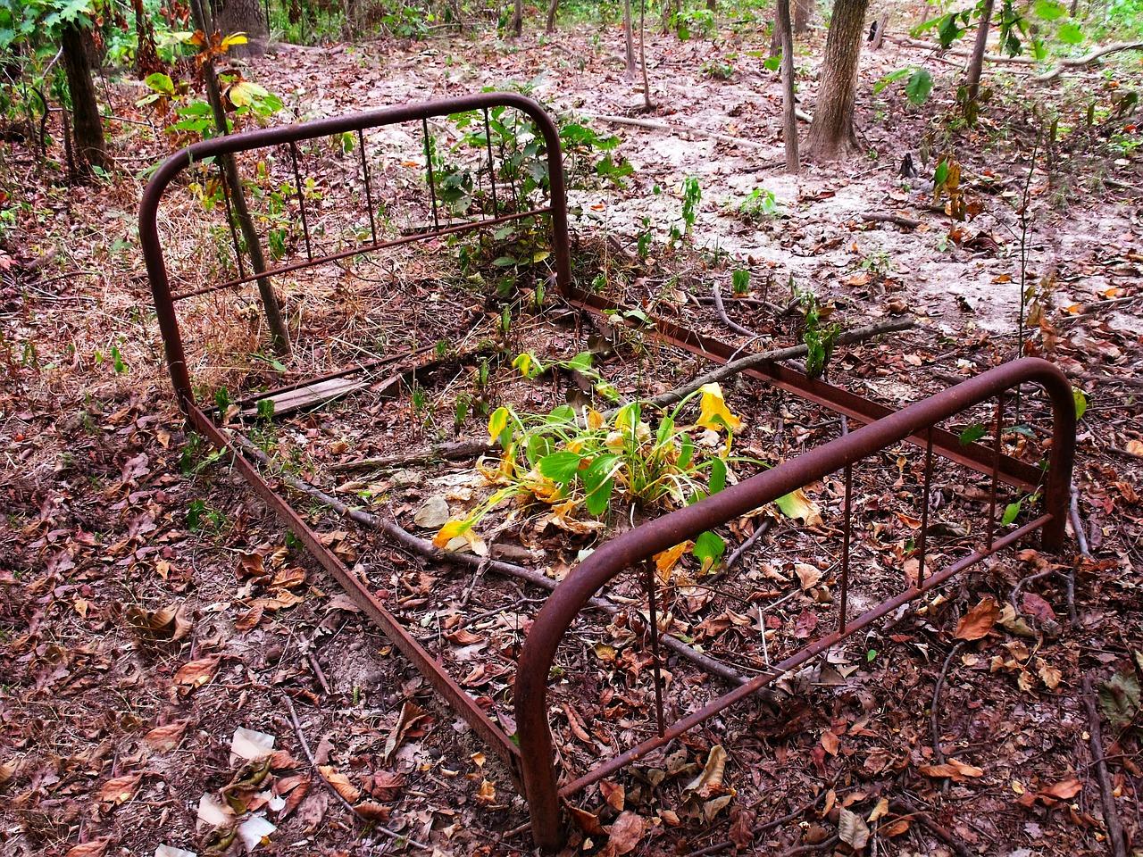 rama łózka w lesie
