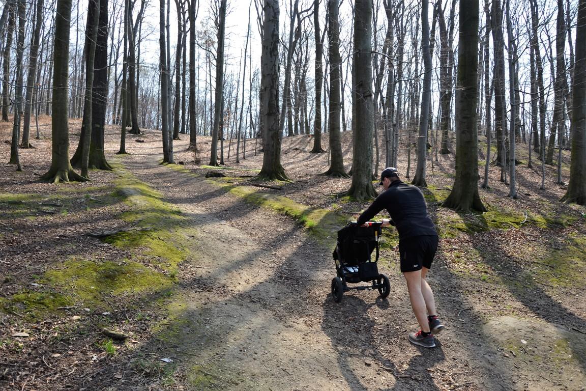 bukowy las w trzebnicy_ podbiegi_zbierajsie