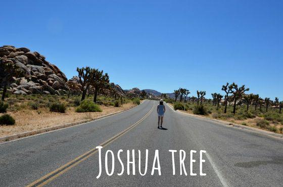 joshua tree usa