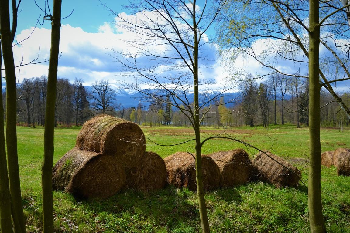 Park-krajobrazowy-w-bukowcu-swiatynia-ateny-zbierajsie (4)