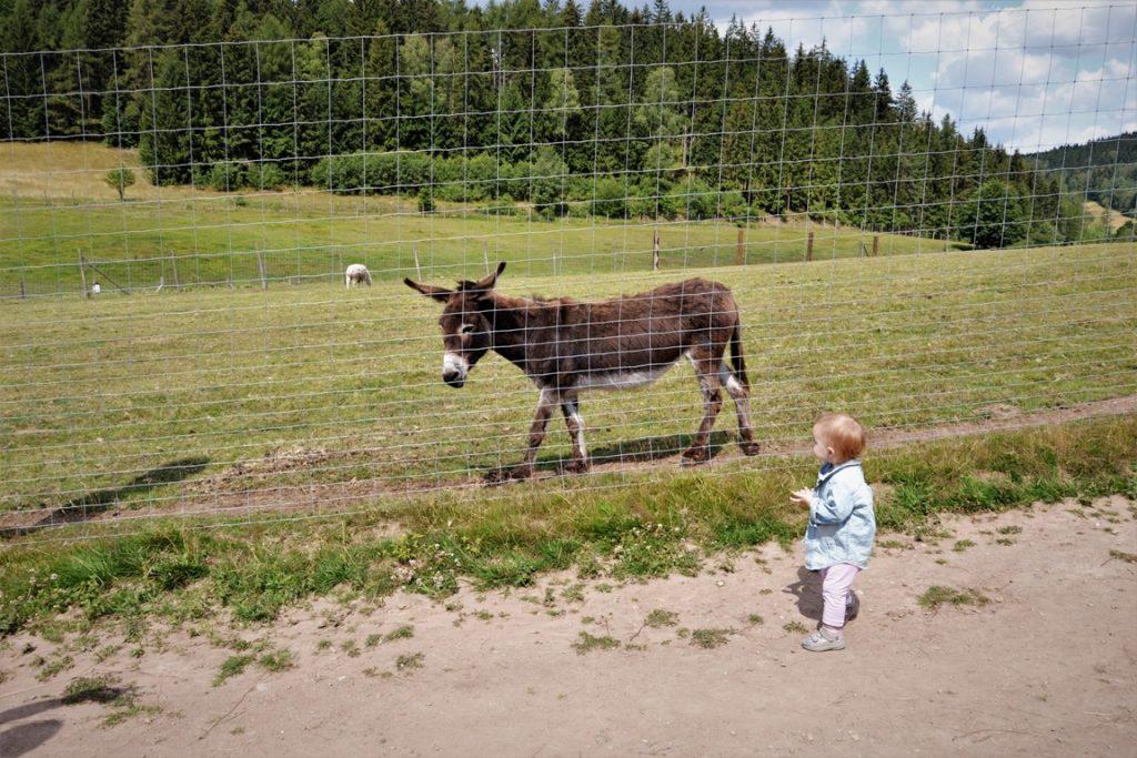 gdzie jechać z dzieckiem na Dolnym Śląsku i w okolicy - zbierajsie - Zoo Łączna