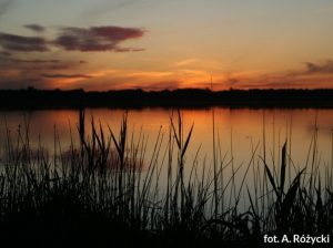 Poleski_Park_Narodowy_Fot-A-Różycki-min
