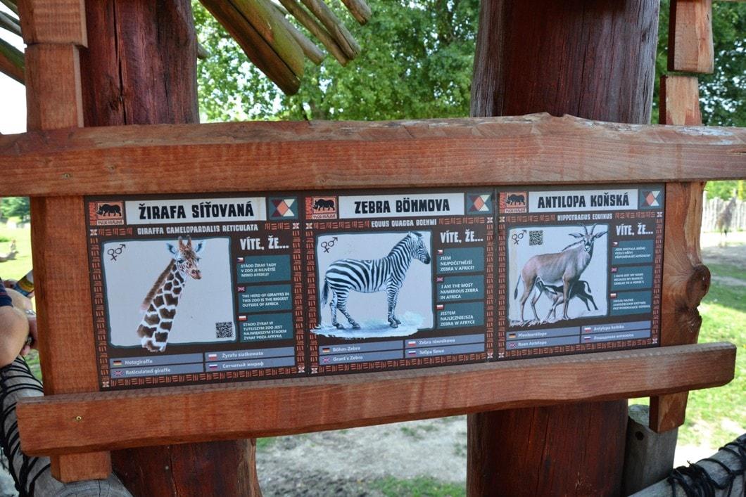 zoo-dvur-kralove-zbierajsie (10)