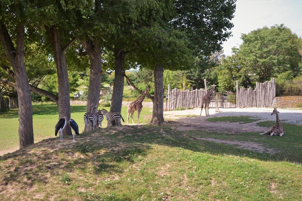 zoo-dvur-kralove-zbierajsie (11)