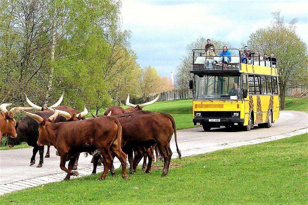 gdzie jechać z dzieckiem na Dolnym Śląsku i w okolicy - zbierajsie - Zoo Dvur Kralove