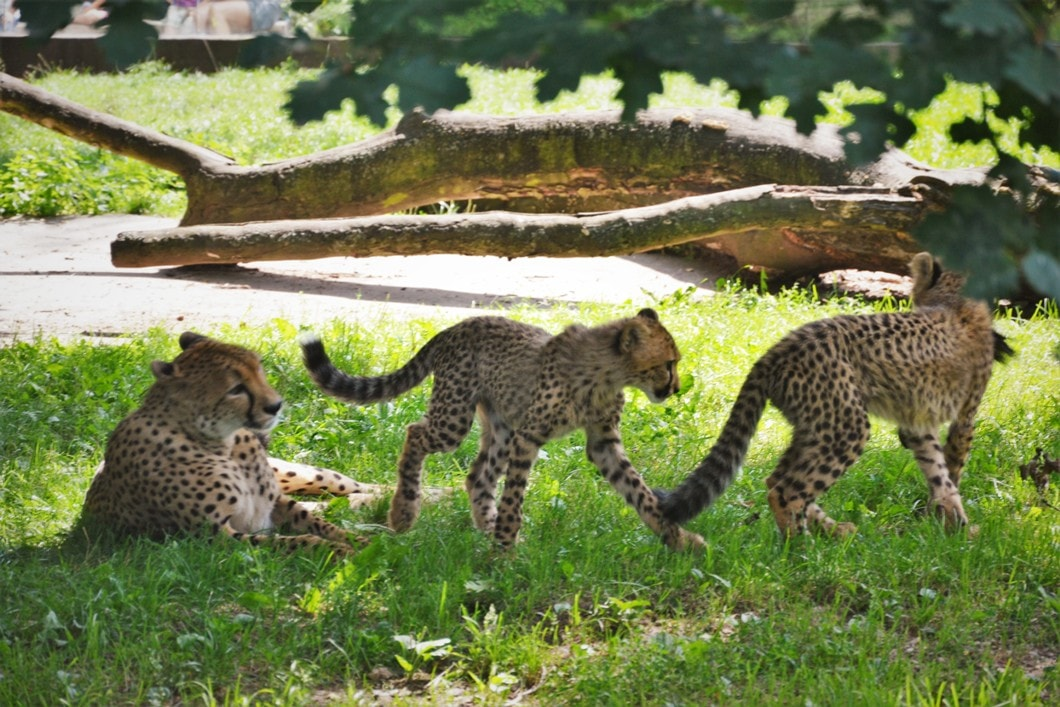 zoo-dvur-kralove-zbierajsie (3)
