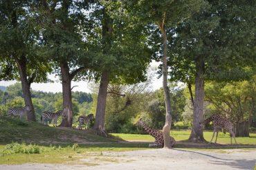 Afrykańskie Safari bez wyjeżdżania z Europy