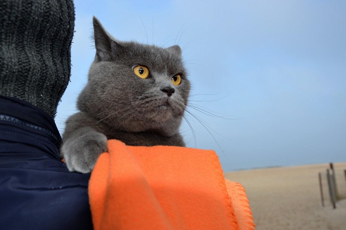 kot naplaży