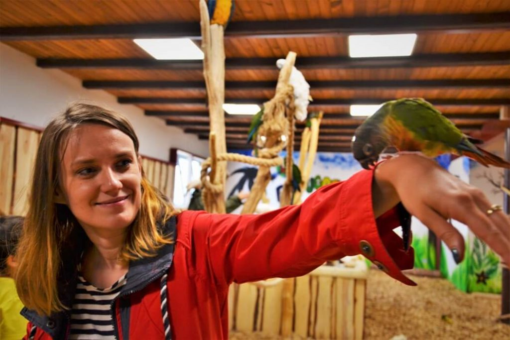 papugarnia-oborniki-slaskie-zbierajsie (10)