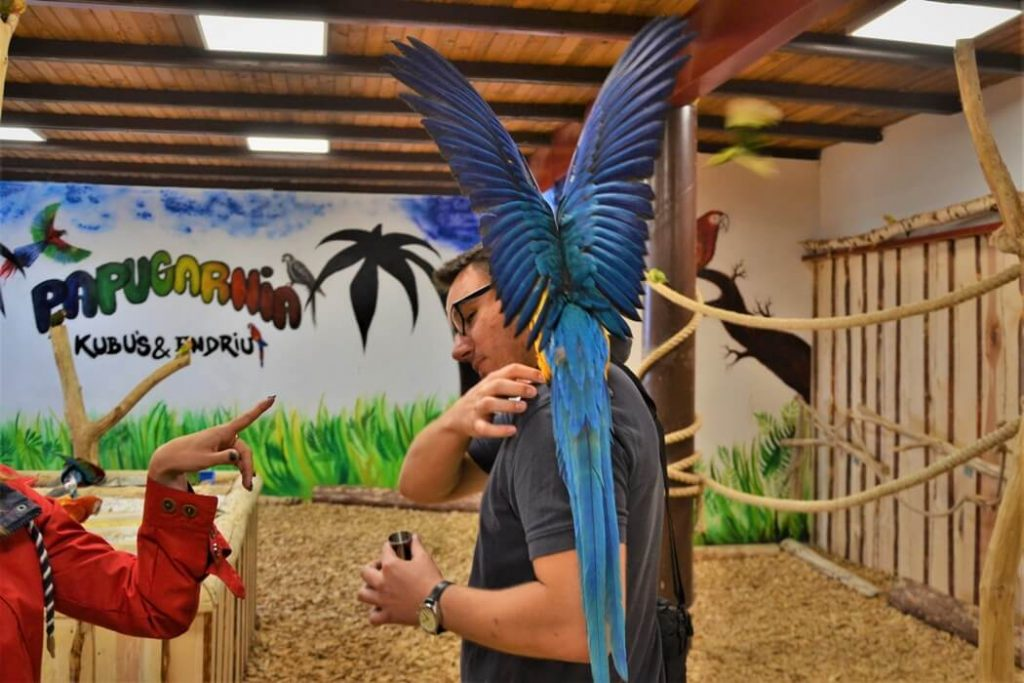 papugarnia-oborniki-slaskie-zbierajsie (11)