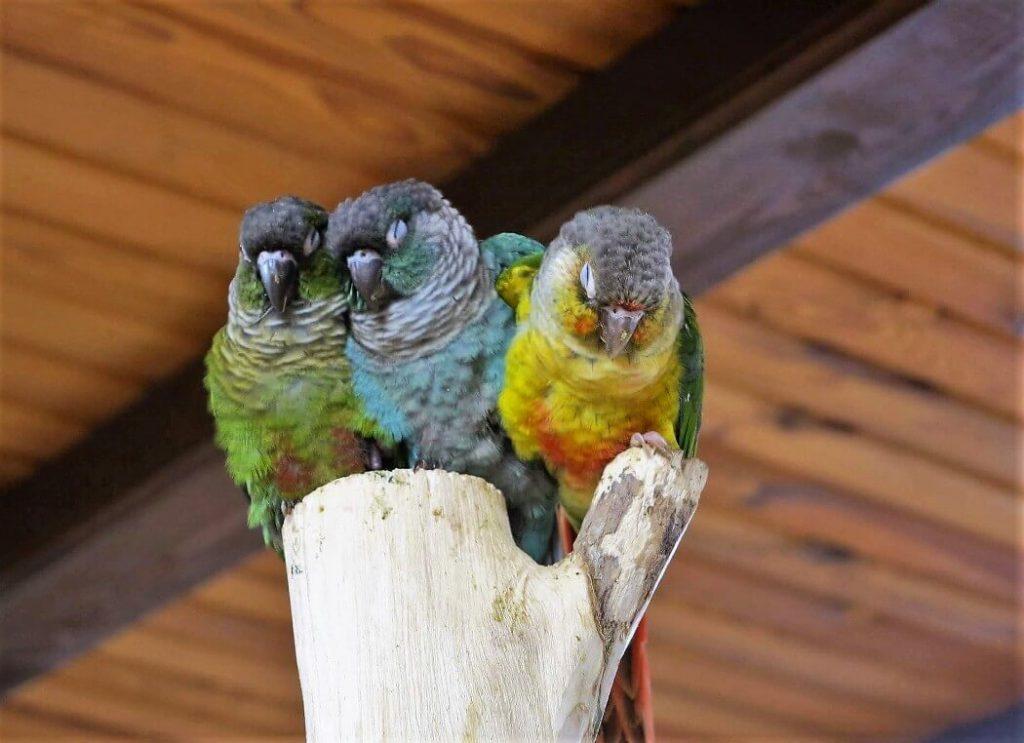 papugarnia-oborniki-slaskie-zbierajsie (13)