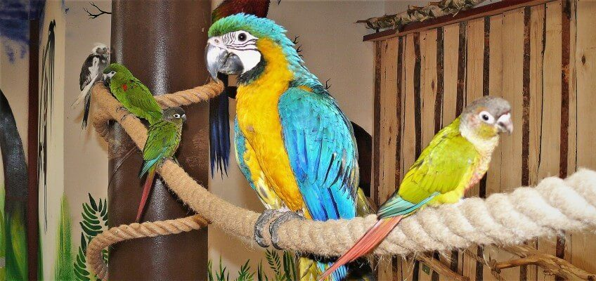 papugarnia-oborniki-slaskie-zbierajsie (14)-top