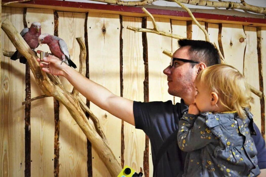 papugarnia-oborniki-slaskie-zbierajsie (2)