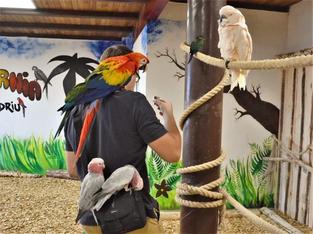 papugarnia-oborniki-slaskie-zbierajsie (5)