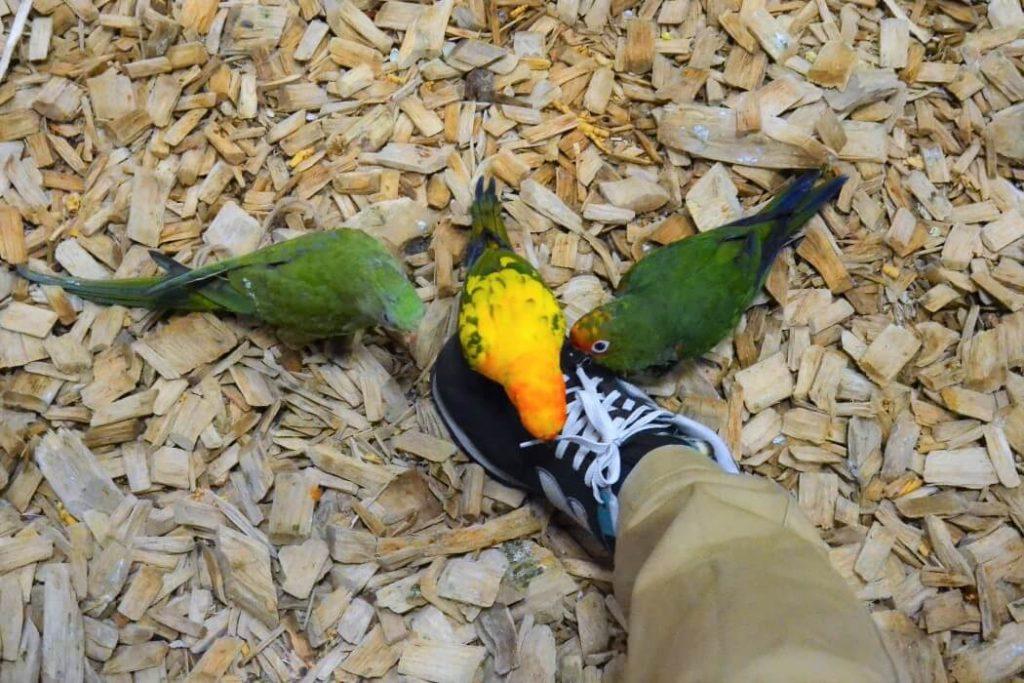 papugarnia-oborniki-slaskie-zbierajsie (6)