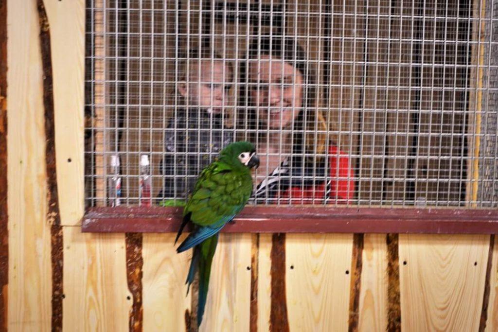 papugarnia-oborniki-slaskie-zbierajsie (7)