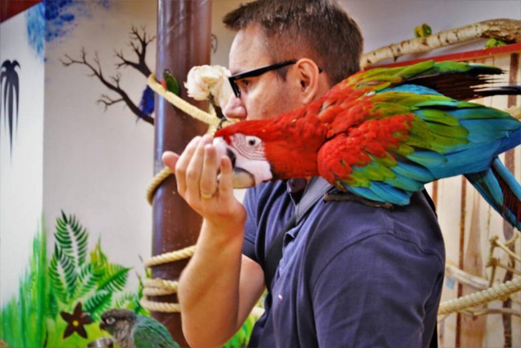 papugarnia-oborniki-slaskie-zbierajsie (8)