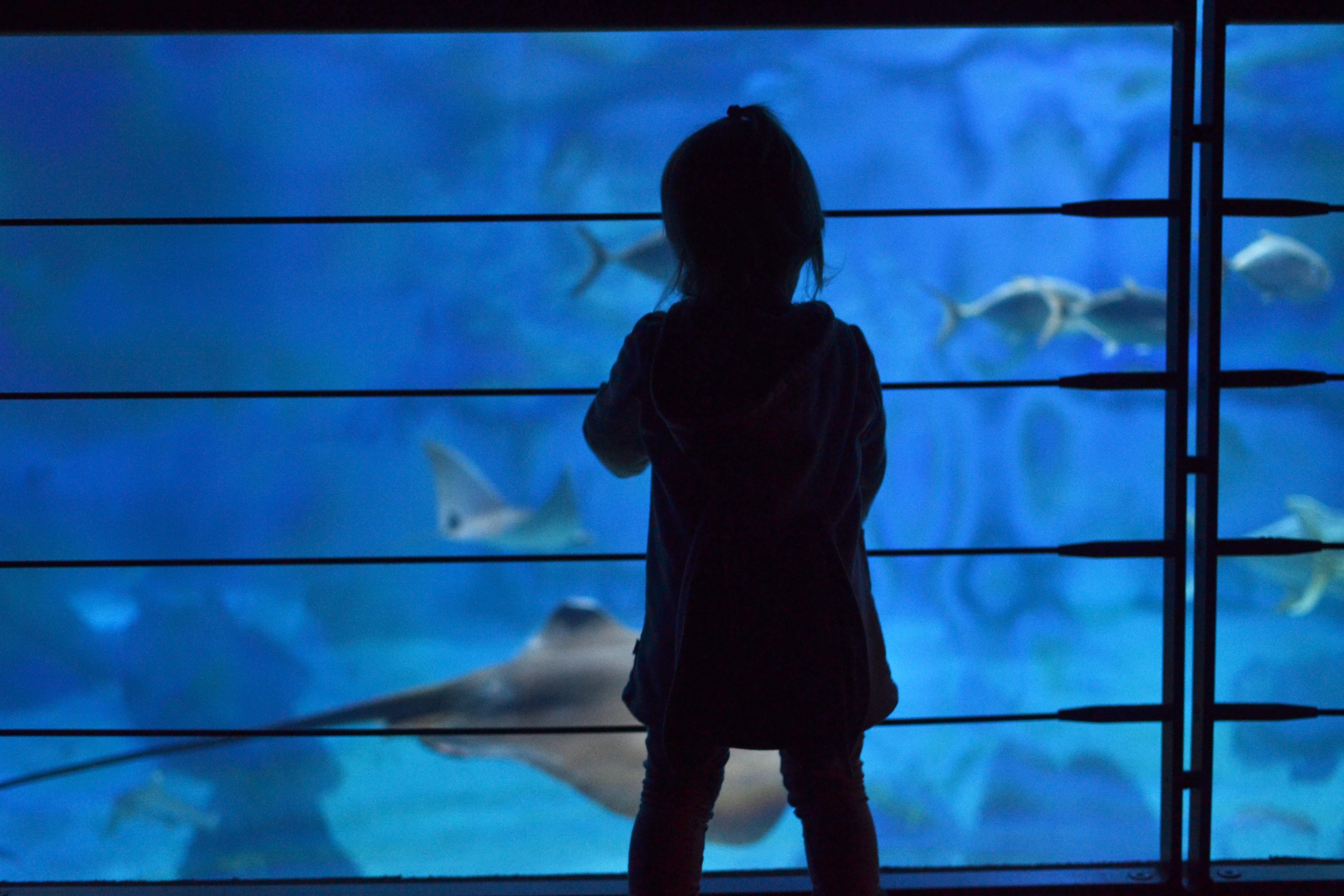 Sara w Oceanarium