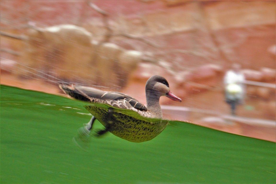 afrykarium-zoo-wroclaw-zbierajsie (1)