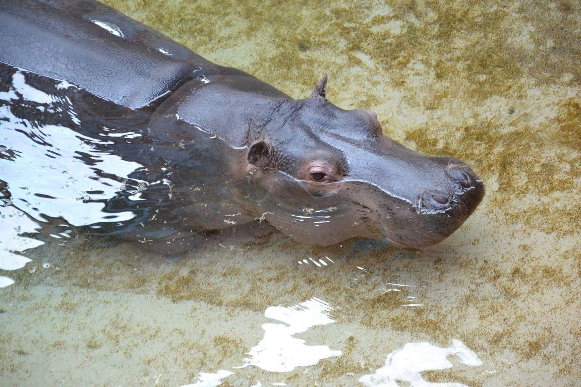 afrykarium-zoo-wroclaw-zbierajsie (26)