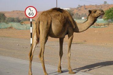 Fujairah – co zobaczyć w okolicy? Slow Driving część 1/3