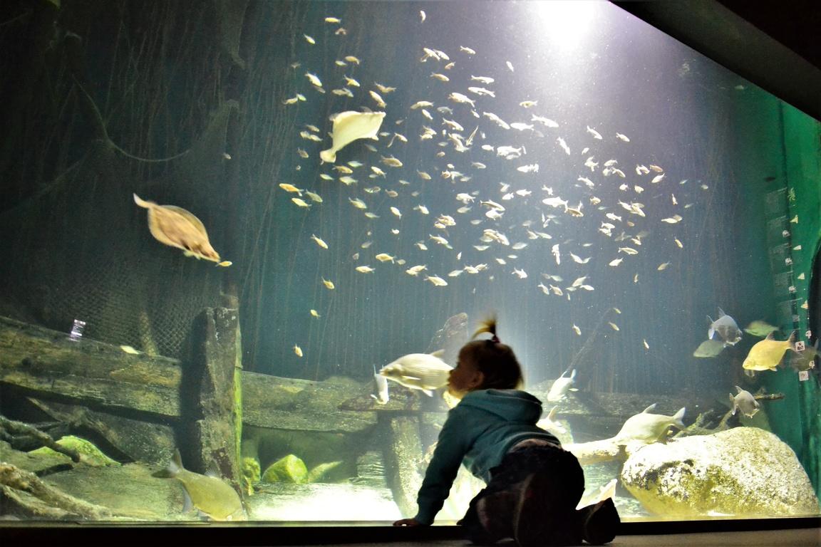 Oceanarium Stralsund (16)