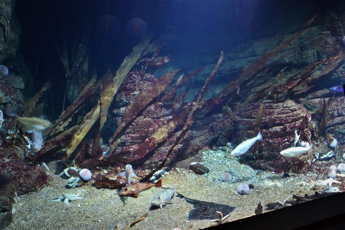 Oceanarium Stralsund (21)
