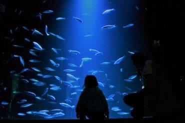 6 RZECZY, KTÓRE WARTO WIEDZIEĆ O BAŁTYKU – OCEANARIUM STRALSUND