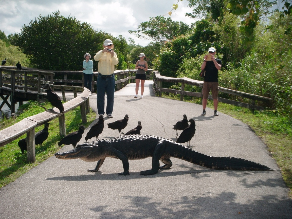 Park Narodowy Everglades na Florydzie_npsphoto_4