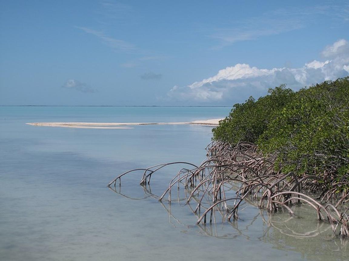 Park Narodowy Everglades na Florydzie_npsphoto_flamingo