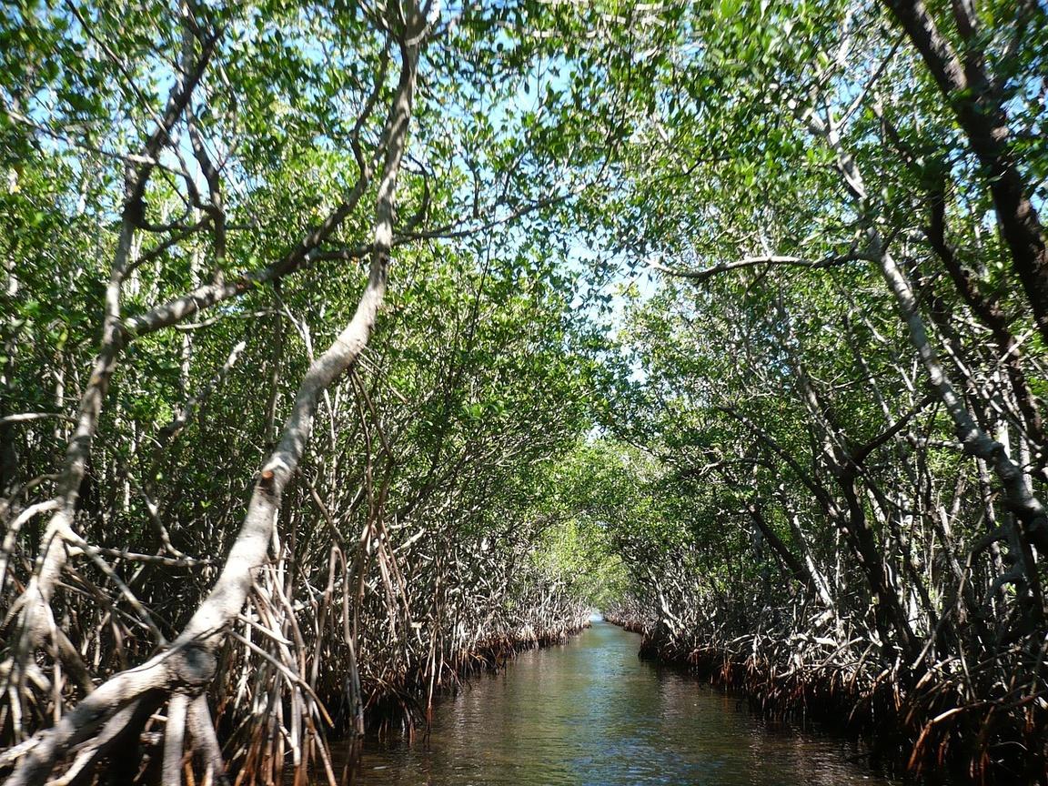 Park Narodowy Everglades na Florydzie_npsphoto_lasy mangrowe