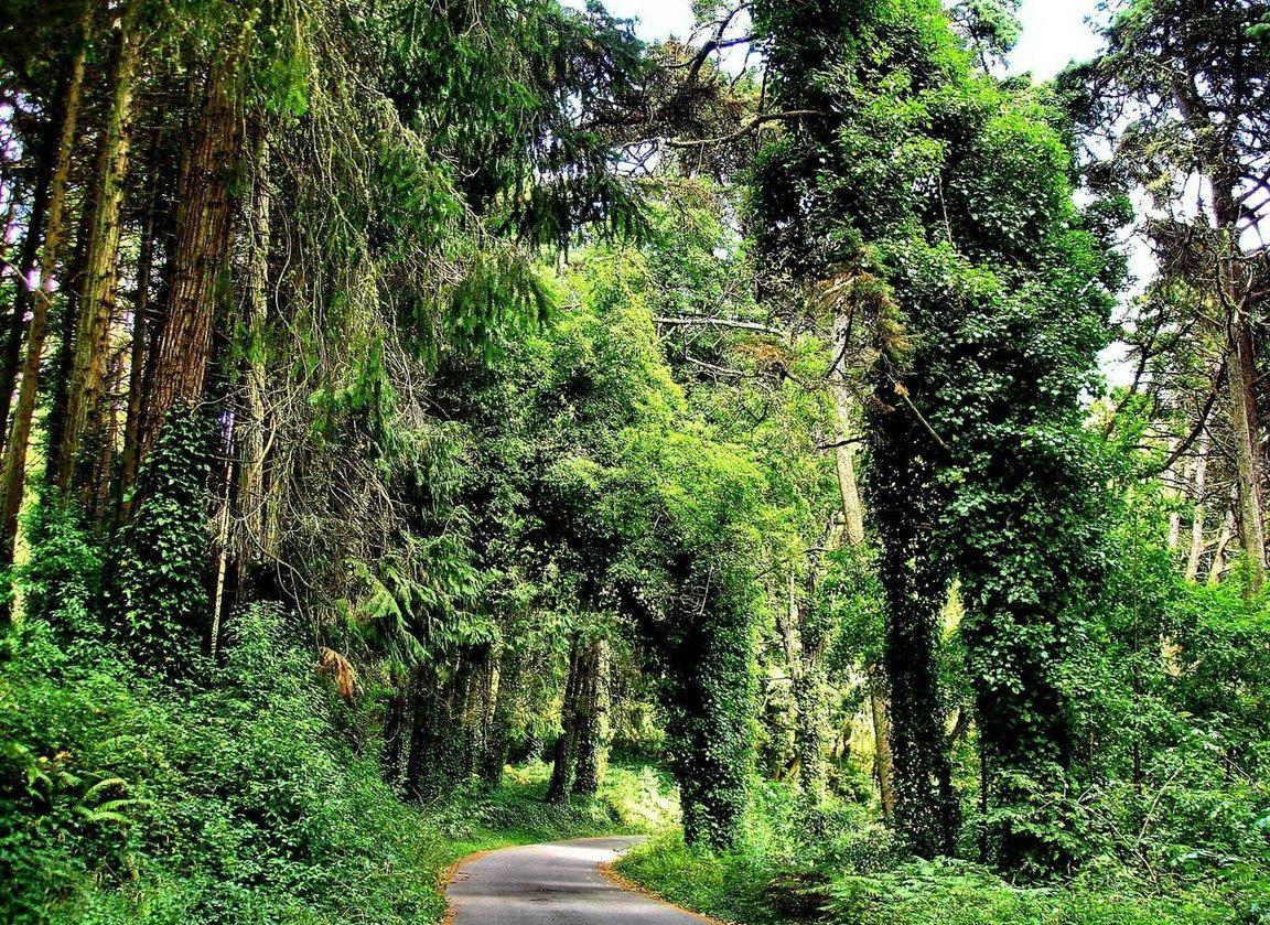 the-park-natural-of-sintra-cascais-03a
