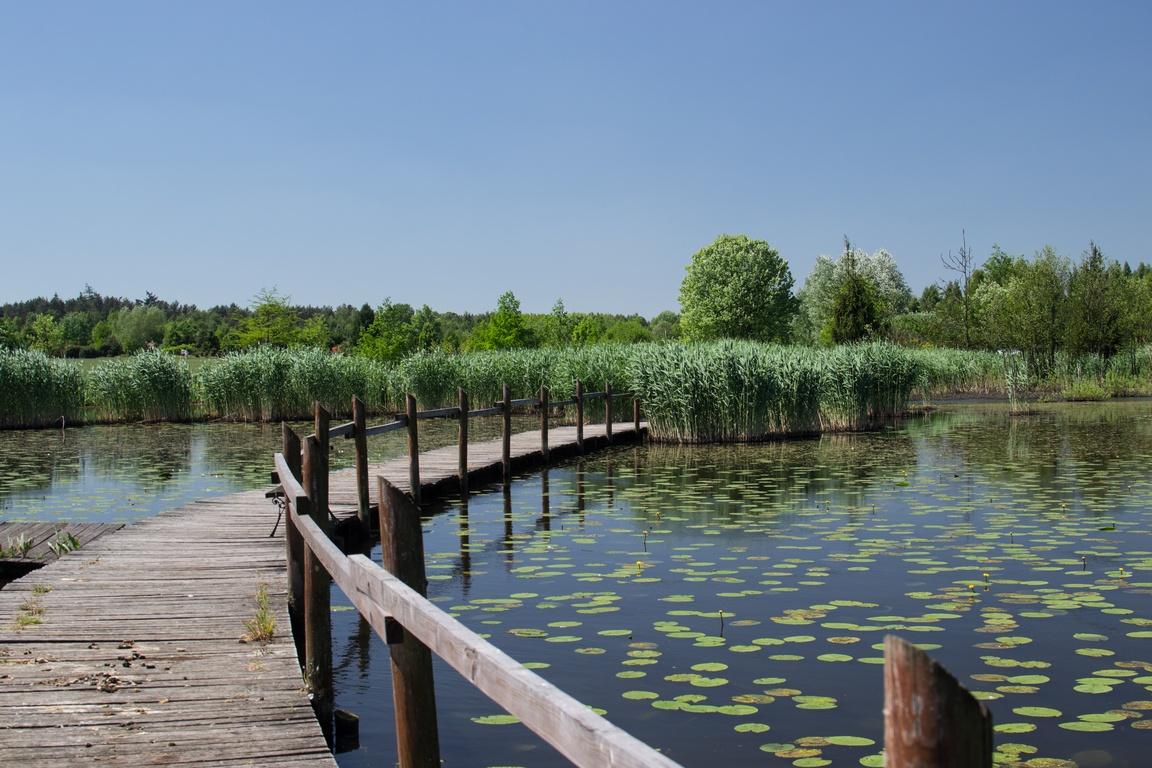 Piękny_Ogród_Na _Dolnym_Śląsku_arboretum_lesne_w_stradomii_zbierajsie