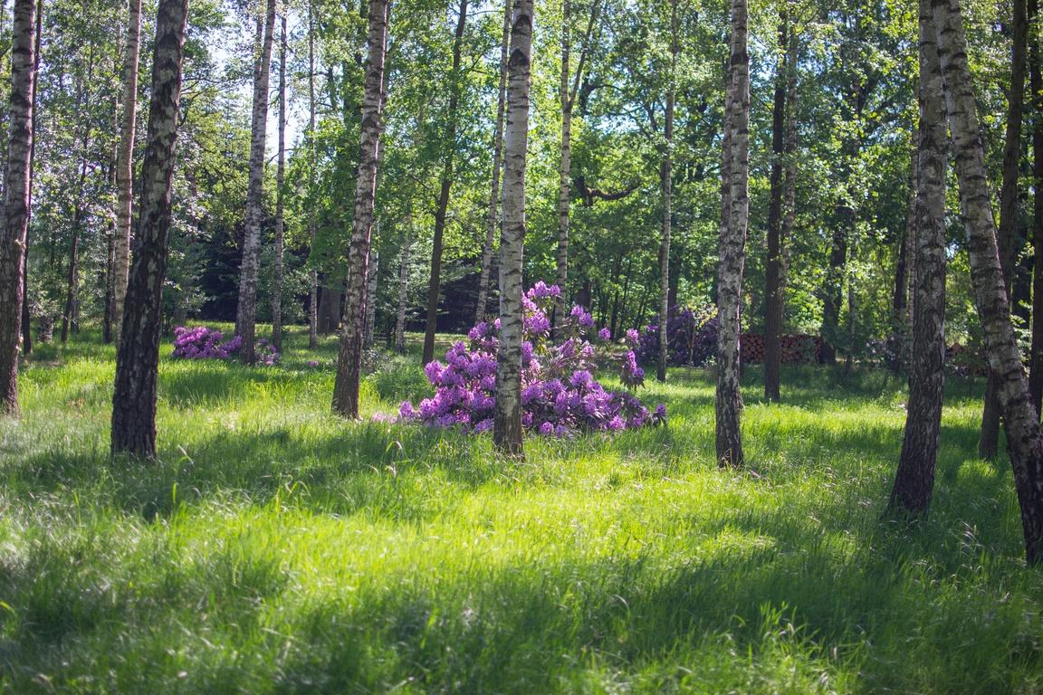 arboretum_lesne_w_stradomii_zbierajsie
