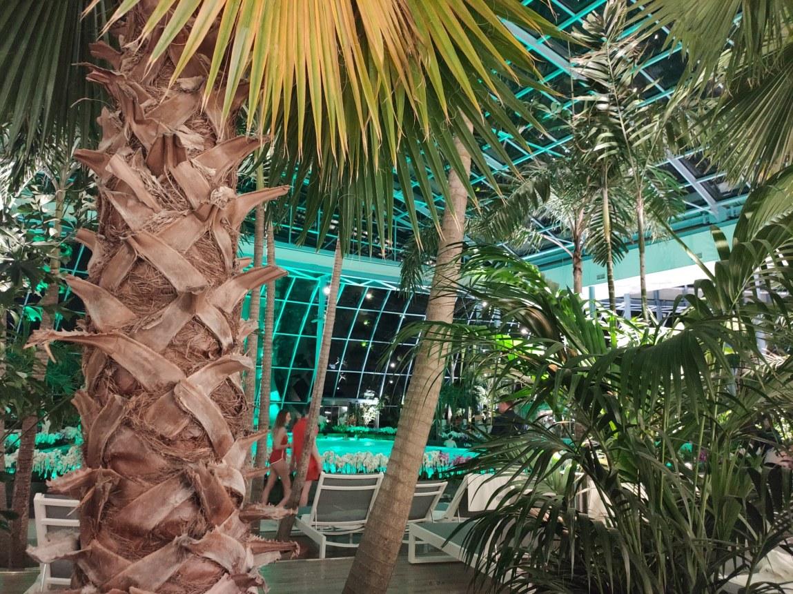 palmy wPark Wodny Suntago