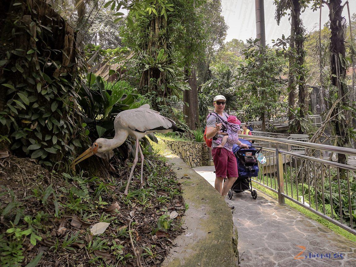 Park Ptaków _ Kuala Lumpur zdziećmi