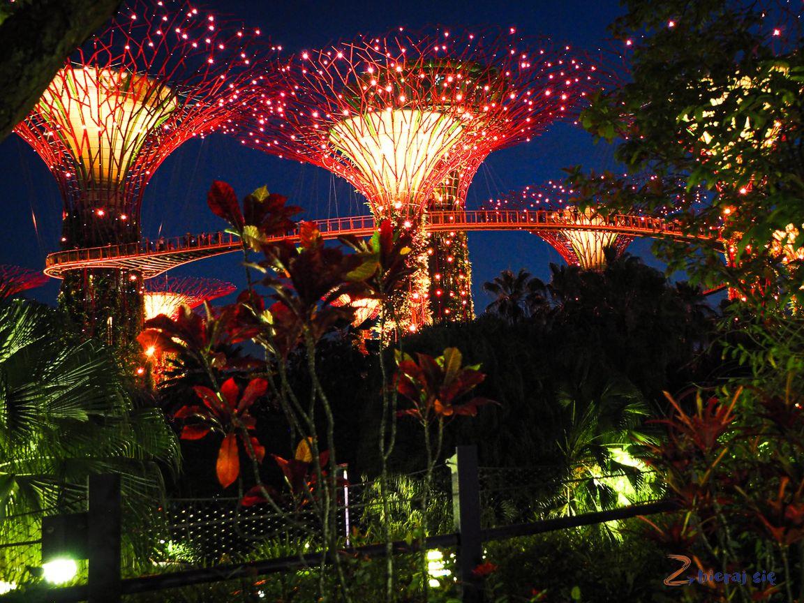 gardens_by_the_bay__LOT_do_singapuru_z_Dziecmi_zbierajsie_brama_azji-73.jpg