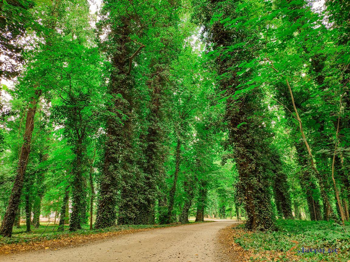 co_robic_w_lubuskim_zbierajsie_jeziora_slawa_winnica_winobranie_lasy