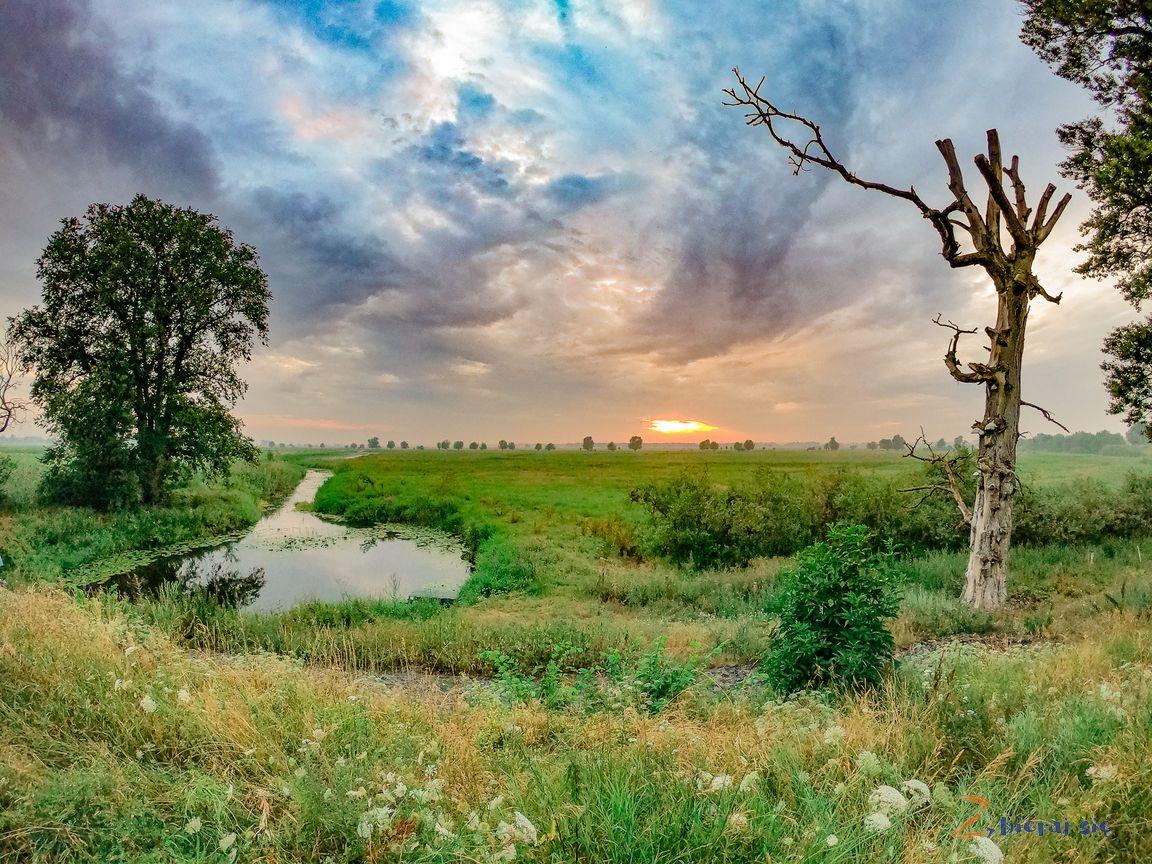 lubuskie_zbierajsie_park_narodowy_ujscie_warty_rzeczpospolita_ptasia_ostoja_ptakow