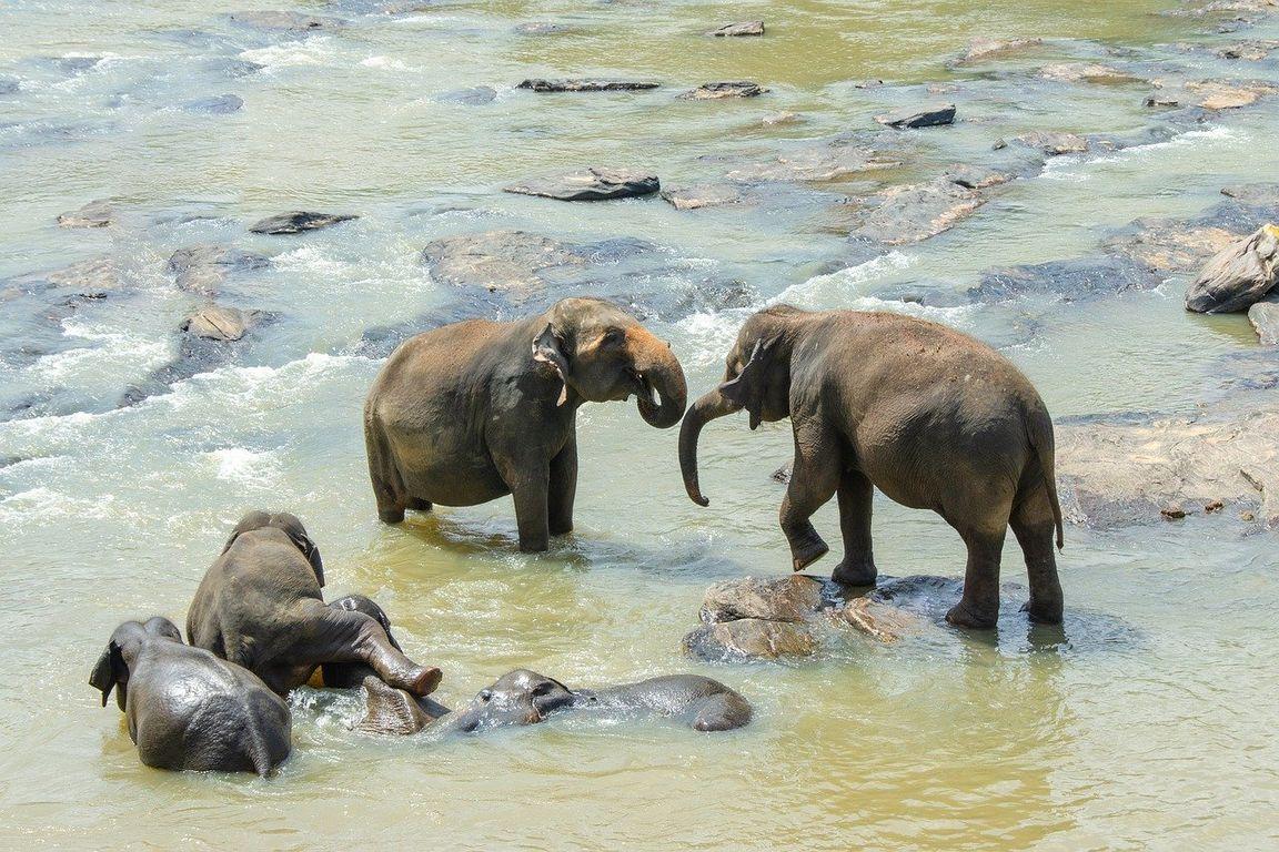 LOT_kalendarz_adwentowy_promocja_sri-lankan-elephant-4043775_1280.jpg