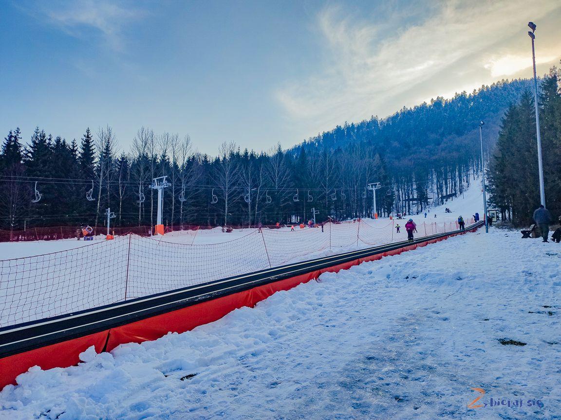 dywan dla małych narciarzy, Dzikowiec